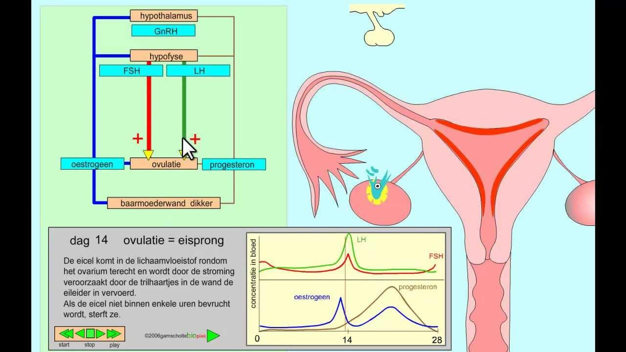 hormonen pil menopauze