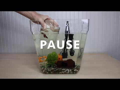 How To Clean The Water Garden