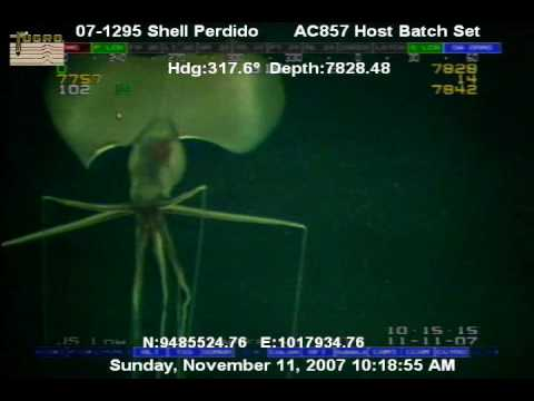 Creature @ 7000 + ft off Shell Rig in Gulf