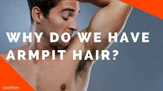 Why do we have Armpit Hair? - UniWhy
