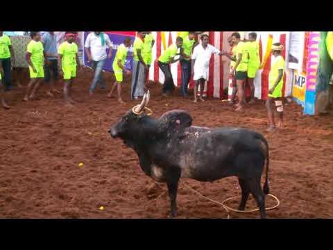 PR Bulls 2018 Alanganallur Jallikattu..............PR காளைகள் 2018 அலங்காநல்லூர் ஜல்லிக்கட்டு