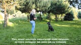 Hotelowe Szkolenie Psa - Tresura Pitbull - Marek Zawadzki - Łódź