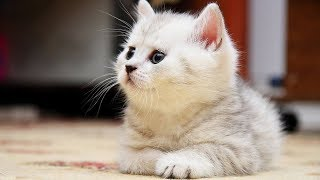 There's A Breed Of Cats Most People Don't Know About And Now We're Completely Obsessed