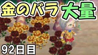 【とび森】#92 念願の金のバラを大量に作ってみた!【とびだせどうぶつの森】【実況】