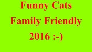 Best Funny Cat Vines =Child Friendly= 2016