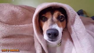 Smart funny dogs video compilation 2016 #2    Smart and Intelligent Dogs in the World