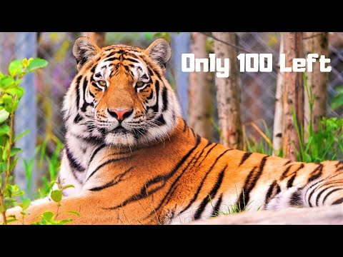 10 Most Beautiful Endangered Animals on Planet Earth