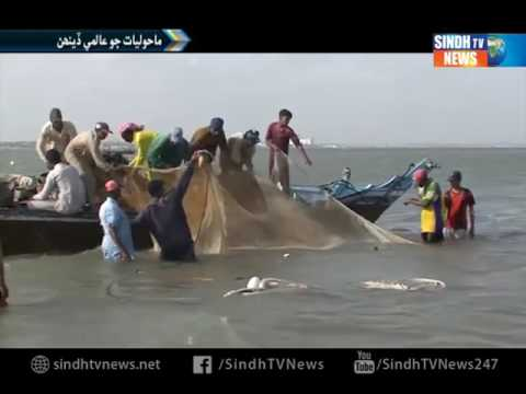 World Environment day   Report - Sindh TV News
