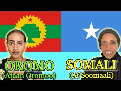 Download Similarities Between Somali and Oromo
