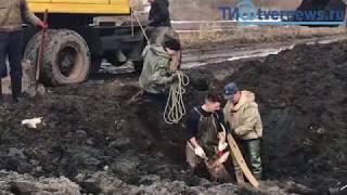 Оленя спасли из болота в Твери