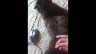 Кошка бдсм