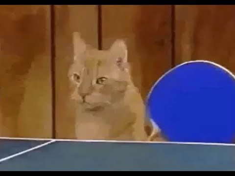 Cats Playing Ping Pong Youtube