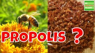 What Is BEE PROPOLIS  Health Benefits of Bee Propolis