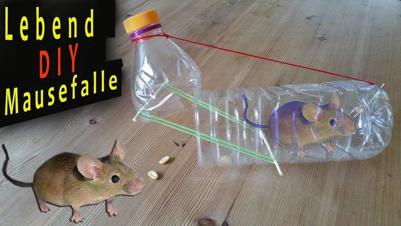 Mausefalle Lebende Maus Fangen Tutorial