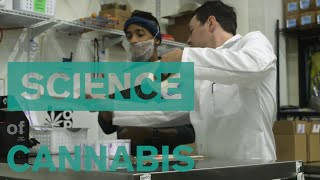 Effects-Focused Edibles Empower You to Choose