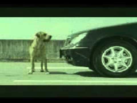 Dog love filing