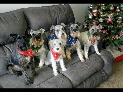 What I bought My Dogs For Christmas   Dog Mom Life