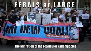 FERALS at LARGE | The Migration of the Leard Blockade Species