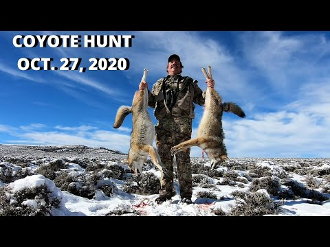 Coyote Hunt Oct. 27, 2020