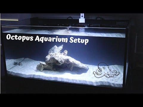 Octopus Aquarium Setup