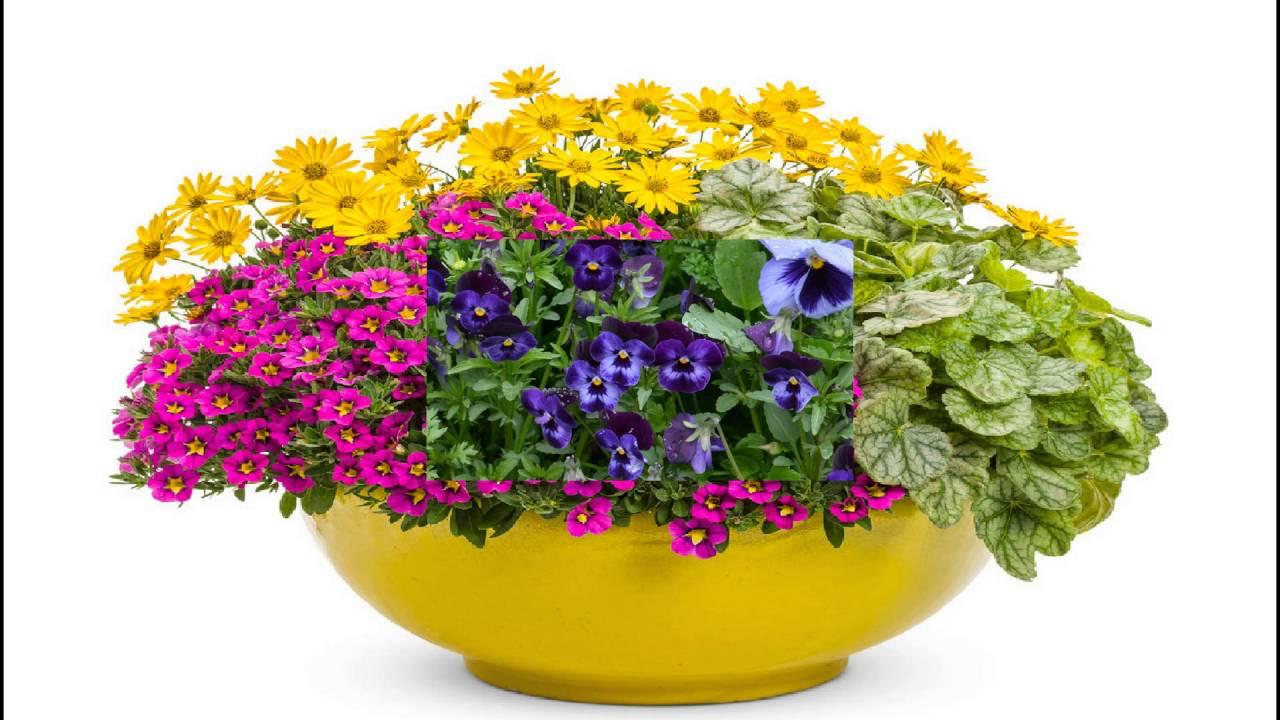 macetas de flores las m s grandes y lindas del mundo