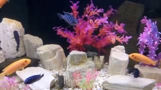 Искусственные растения в аквариуме с цихлидами
