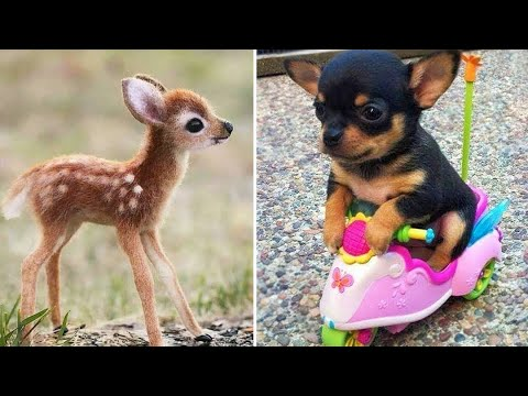 Baby Animals 🔴 Funny Cats and Dogs Videos Compilation (2020) Perros y Gatos Recopilación #15
