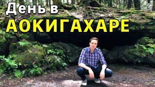 Провел день в жутком лесу самоубийц - Аокигахара | Япония