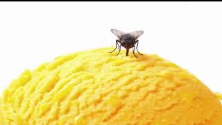 8 Natural Ways to Get Rid of House Flies - Health Report (HD)
