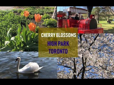 High park Toronto / Cherry blossoms in High park / Places to visit in Toronto / Travel to Ontario