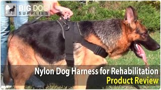German Shepherd And Other Dogs Wearing Training Nylon Harness