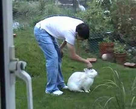 Noah My Continental Giant Rabbit And Martin Youtube