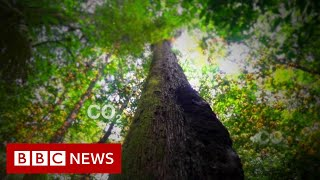 Amazon Rain Forest: .Once it's gone, it's gone forever.