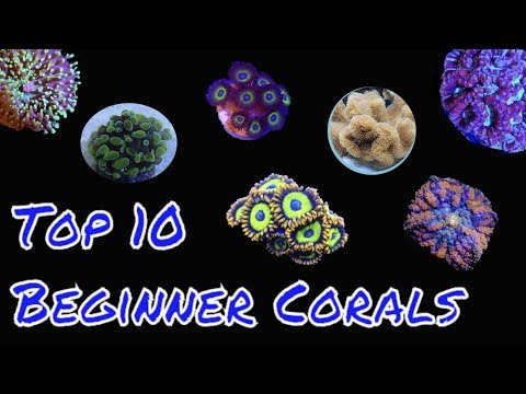 Top 10 Corals for beginners