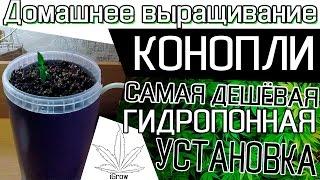 домашнее выращивание коноплИ - САМАЯ ДЕШЁВАЯ ГИДРОПОННАЯ УСТАНОВКА ДЕНЬ 19