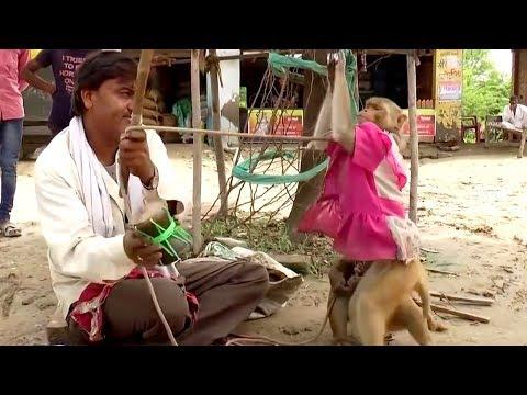 छम्मा तिवारी के ठुमके बंदरिया ने लगाए झूम झूम के | Chamma Tiwari & Monkey Dance
