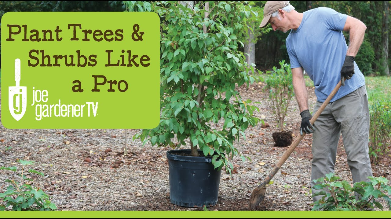 How To Plant Trees and Shrubs Like a Pro