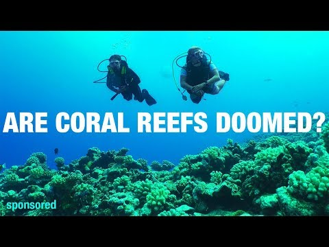 Corals reefs aren't as doomed as you think | Shed Science