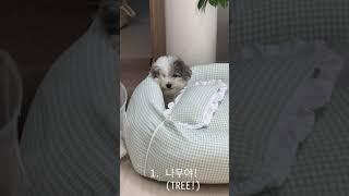 강아지를 낚아 보았다ㅋㅋㅋㅋ