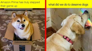 The Happiest Dog Memes Ever That Will Make You Smile From Ear To Ear - part 2