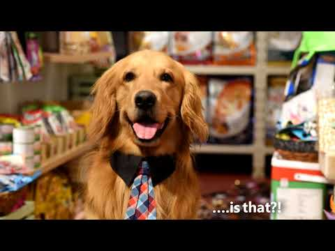 Buy Pet Supplies Online In India Dog Cat Products Online Heads
