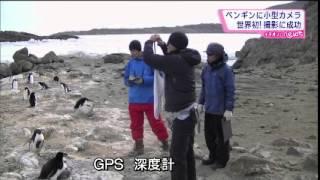 ペンギンはどのように獲物を捕っているのか。 国立極地研究所のメンバー...