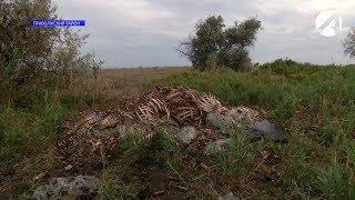 В Астраханской области ищут хозяина кладбища домашних животных