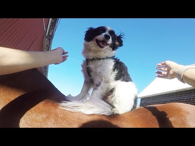 My Dog is a Cowboy! + Riding New Horse Frosty! | Barn Vlog Ride With Me #5