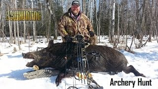 Hog on bow hunt almost comes into ground blind! Arrow placed perfect on this pig