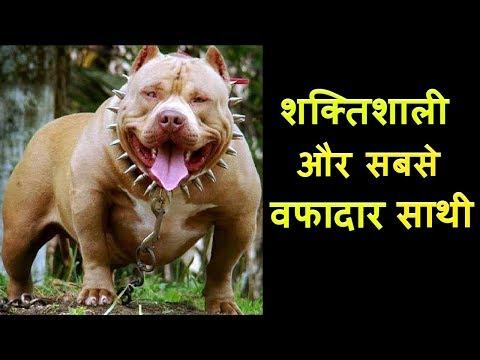 सबसे खतरनाक कुत्तों के बारे में जाने | MOST DANGEROUS DOG BREEDS | XtraGyanTv