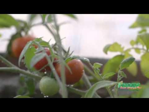 ТОП-5 овощей для выращивания на подоконнике зимой