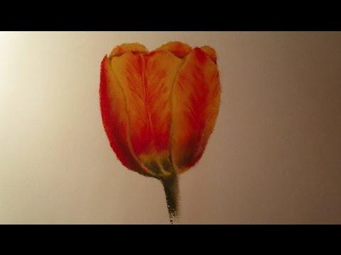 Dessin Pour La Fête Des Mères Dessiner Une Tulipe Youtube