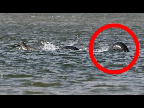Photographer Captures The Best Picture Of The Loch Ness Monster Ever