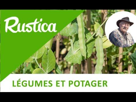 Plantation des haricots rames doovi - Comment semer du persil ...